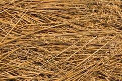 Wheat Stalls Royalty Free Stock Image