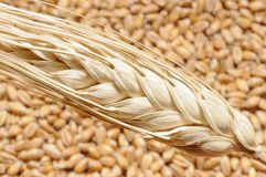 Wheat steam on grains Stock Images