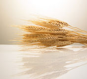 Wheat stems Stock Image