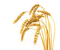 Wheat stems, isolated. Over white Stock Images