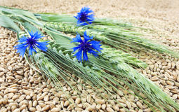 Wheat still life. With wheat flowers Stock Images