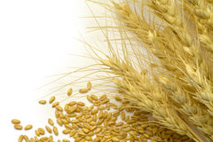 Wheat Stocks and Grain Stock Images