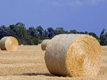 Wheat Straw. Rolled bales of wheat straw in a recently harvested dry wheat field in Michigan Royalty Free Stock Photography