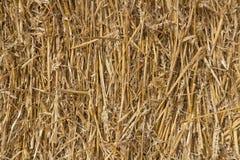 Wheat Straw Stock Image