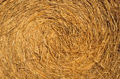Wheat straw background Stock Images