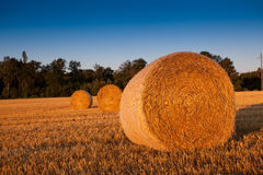 Wheat Straw Bale. View of round wheat straw bale Royalty Free Stock Photo
