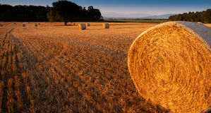 Wheat Straw Bale. View of round wheat straw bale Royalty Free Stock Photography