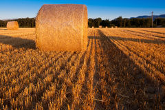 Wheat Straw Bale. View of round wheat straw bale Stock Photos