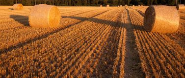 Wheat Straw Bale. View of round wheat straw bale Stock Images