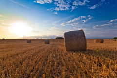 Wheat straw bale. After harvest Stock Image