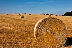 Wheat straw bale Stock Image