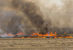Wheat Straw on Fire Stock Image