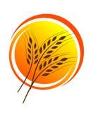 Wheat straw illustrtion Royalty Free Stock Photos