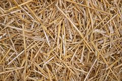 Free Wheat Straw Pile Background Stock Photo - 137727530