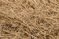 Wheat straw. Pile of wheat straw , detail Royalty Free Stock Image