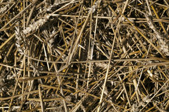 Wheat straw pile texture. Natura lseasonal background and texture for your ideas stock image