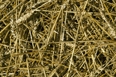 Wheat straw pile texture. Natura lseasonal background and texture for your ideas royalty free stock image