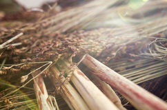 Wheat Struck by Sunlight Stock Photography