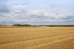 Wheat stubble and farm Stock Photography