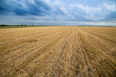 Wheat stubble field over stormy cloudscape. Royalty Free Stock Image