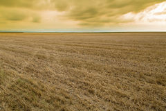 Wheat stubble field over yellow cloudscape. Royalty Free Stock Images