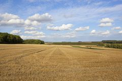 Wheat stubble and woodland Royalty Free Stock Photos