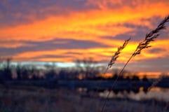 Wheat at sunet Stock Photos