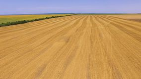 Wheat and sunflower fields, aerial video. Fields with various types of agriculture, aerial video stock video footage