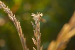 Wheat on a sunny day stock photos