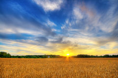 Wheat sunset Royalty Free Stock Photos