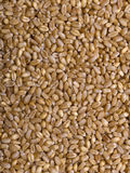 Wheat Texture Royalty Free Stock Photo