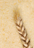 Wheat and texture bread Stock Images