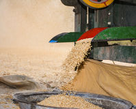 Wheat threshing Stock Photography