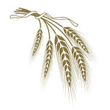 Wheat tied with a ribbon. Spikelets of wheat tied with a ribbon Stock Photography