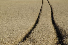 Wheat track Royalty Free Stock Photos