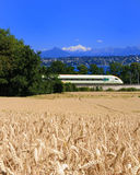 Wheat Train Lake Aps. Passing Swiss high speed train between a ripe wheat field, Lake Geneva and the French Alps with a snowcapped Mount Blanc in the center Stock Images