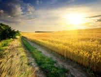 Wheat under sunlight Royalty Free Stock Image