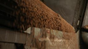Grain truck unloading. Wheat is unloaded from a truck at a flour mill. Wheat is strewing. Unloading of wheat grain. Wheat grain close-up. Transportation of stock footage