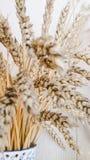 wheat Stock Photos