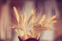 Wheat in a vase stock photography