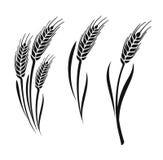 Wheat vector ears Stock Photos