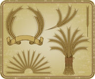 Wheat, a vintage set. Vector illustration. stock photos