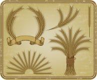 Wheat, a vintage set. Vector illustration. Stock Photos