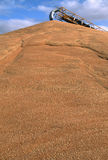 Wheat in Western Australia. Wheat piled outside as temporary storage during a bumper year. A grain conveyor creates the pile in Toodyay, Western Australia. Dark royalty free stock photography