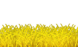 Wheat is on white background . Royalty Free Stock Image