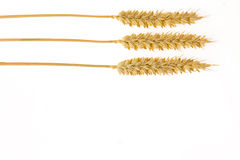 Wheat on white background Stock Photography