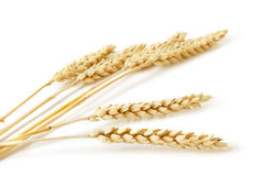 Wheat on white background Royalty Free Stock Image