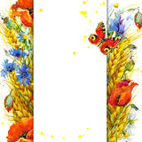 Wheat and wildflower. watercolor illustration Royalty Free Stock Photos