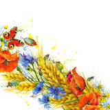 Wheat and wildflower. watercolor illustration Royalty Free Stock Photo