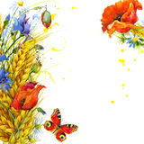 Wheat and wildflower. watercolor illustration. Wheat, wildflower and butterfly. watercolor illustrationn Stock Images